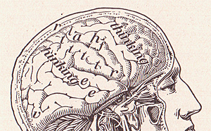 Our Brain by perpetualplum, on Flickr